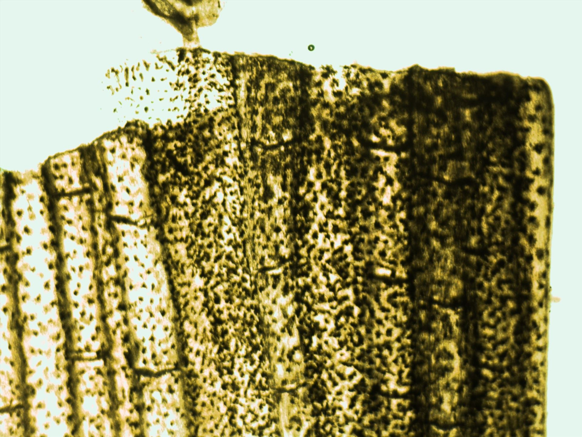 fish x200.jpg -  by Allie Smith Photography